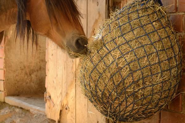 Verdauung-der-Pferde56bf22836c422