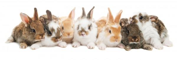 Grundlage-der-Kaninchenern-hrung